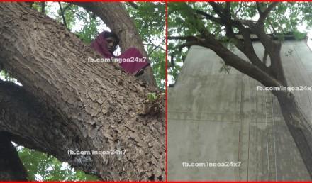 Women Sitting on Tree
